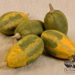 Tricolored and green gourds designed by tish Bachleda