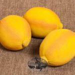 Lemon design by Tish Bachleda